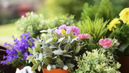 春季家庭养花必做的3件事,你都做了吗?做对了能让植株长势旺盛