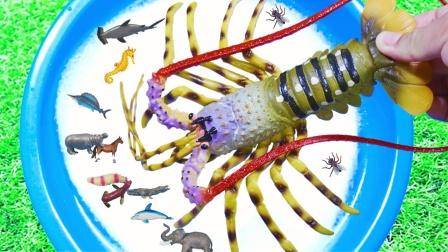 认识大龙虾寄居蟹虎鲸等动物