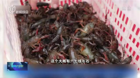 视频|潜江小龙虾开捕 每公斤售价超60元