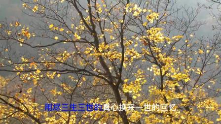 《站台》《三生三世》《中国人》《我心永恒》