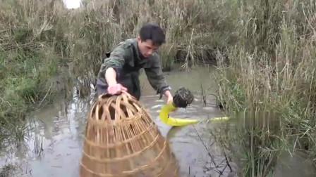 小莫抽干田边小水塘,捕获了近百条鱼,抓得太过瘾,都不想回家了