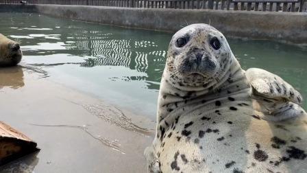 海豹:我当时害怕极了