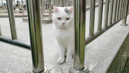 这个猫咪好像有点傻啊