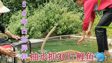 古井里面有条鲤鱼,听说个头很惊人