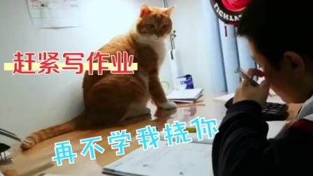 """搞笑视频:我家的猫""""成精""""了,难道它就是我妈派来的监工?"""