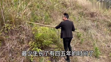 """农村小伙在深山发现一条7米长的""""过山枫"""",村民说生长很多年了"""