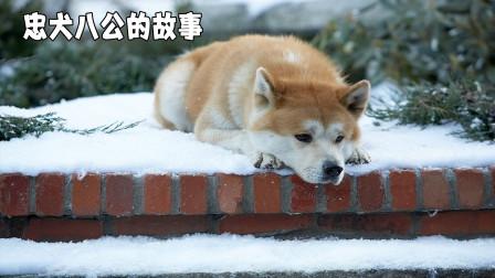 主人意外去世,狗狗在原地等待了10年,只为遵守他们的约定