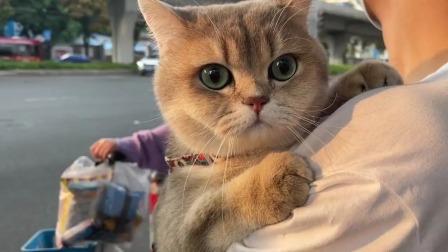 抱着猫咪出去散步啊