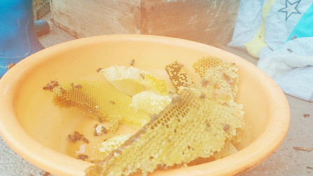 今天买来了一箱蜂蜜,养蜂师傅正在打开,听说蜂蜜甜过初恋!