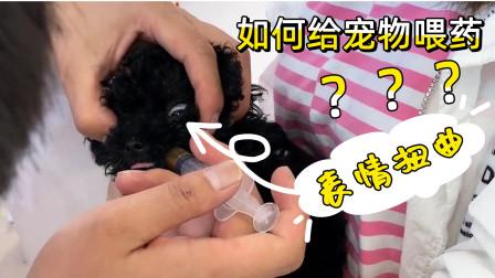 黑糖小时候:宠物医生示范如何给宠物喂药,小奶狗用尽全身力气反抗