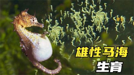 3个奇特的动物生育方式,海马是雄性生育,一次产仔2000多只?