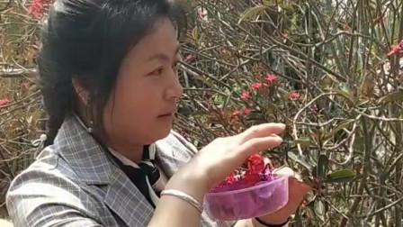 云南西双版纳旅游摘鲜花留念
