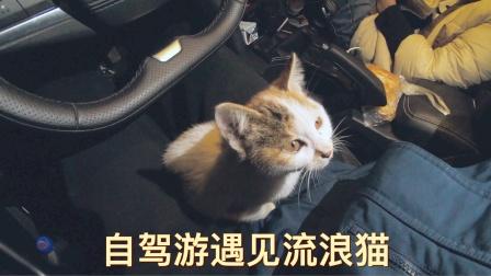 自驾游在停车场遇见流浪猫,到底要不要收养,让人很纠结