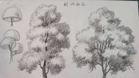 初一(7)班 美术课 画树练习