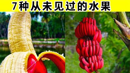7种你从未听说过的水果,红香蕉比黄的更好吃,还能让人快乐?