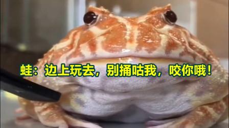 蛙:边上玩去,别捅咕我,咬你哦!