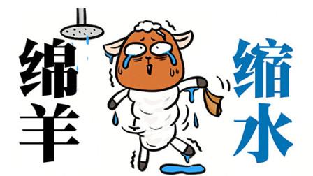 绵羊洗个热水澡后会不会缩水?