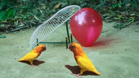 小伙制作捕抓陷阱, 一个电风扇一个气球,不料收获大大的!
