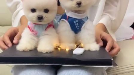 哇,小姐姐好看还是小狗狗可爱?