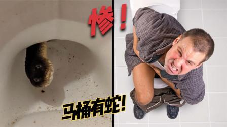 6个比你倒霉的人,上厕所时马桶里突然钻出蛇是种什么体验?