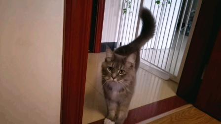 无敌可爱的小猫咪,神出鬼没#萌宠#猫咪日常