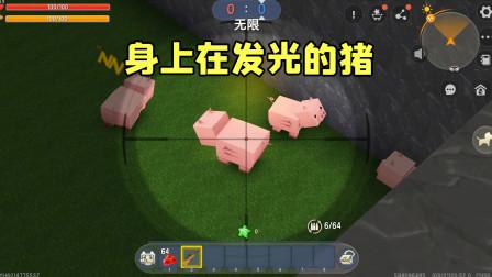 迷你世界:身上在发光的猪见过吗?变身的表妹一下就被找到了