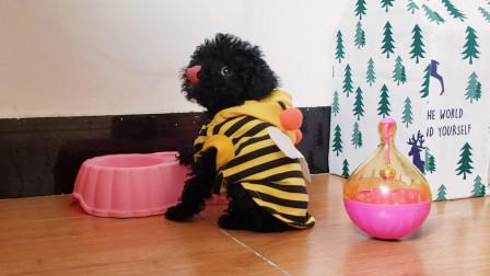 黑糖小时候:小奶狗为了吃饭真的是啥事都干得出来!