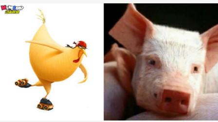 不同位数像素的MC生物对比-小鸡 vs 小猪