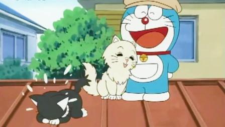 哆啦A梦一生的痛,费劲心思追到的小猫咪,竟然是只公的!
