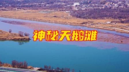 兰州天鹅滩三江口手机航拍视角视频