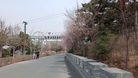 桃红柳绿四月天 带你走进凌海九华山公园赏桃花听鸟鸣品尝春天的味道