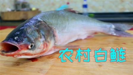 自从知道白鲢鱼这要烧,我家老板隔三差五点名要吃,实在太美味了