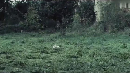 男子正在放羊,抬头一看突然发现不对劲,连羊都不要了掉头就跑
