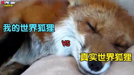 我的世界动画-我的世界狐狸 vs 真实世界狐狸