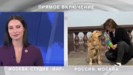 俄罗斯女记者街头播报天气 狗子突然窜出一口叼走话筒 全程爆笑!