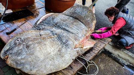 重达900公斤的鱼,大叔每月只卖1天,白白嫩嫩像豆腐,来晚吃不到