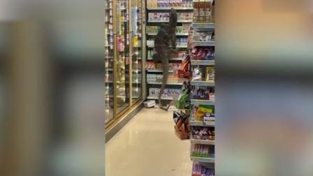 现场!泰国巨型蜥蜴闯进商店爬上货架 顾客吓坏并掏出手机抓拍