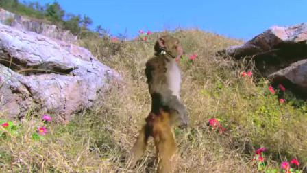小伙在山谷练功,狂追山中猴王,连动作都一模一样!