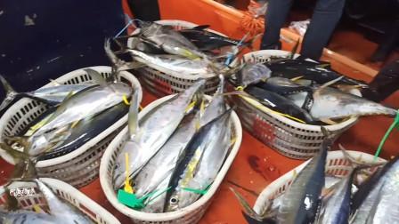 一条船16个钓位,钓友钓40米水层遇到金枪鱼群,狂拉停不下来