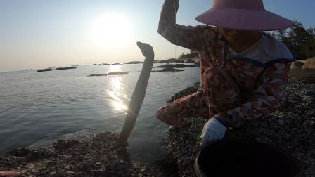 阿忙专找礁石区钓海鳗,刚扔下去就有大货吃饵,卷成一团太难解