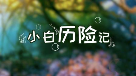 日式烧烤丨白对虾历险记