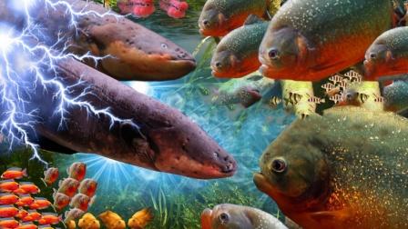 """将一群食人鱼饿上10天,扔进去一只""""电鳗"""",场面瞬间失控了!"""