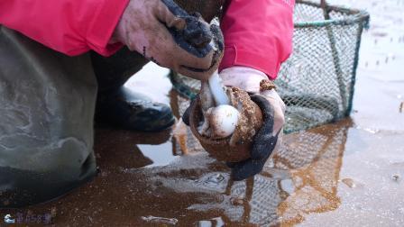 大梅赶海挑战挖沙蟹。转身掏出可爱八爪,收获多少不影响快乐!