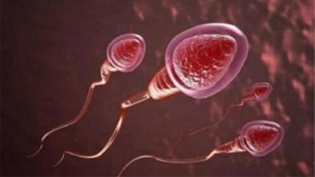 """女人体内没有""""受精成功""""的精子,到底去哪了?看完之后不要笑哦"""