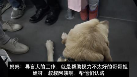 """母女俩坐公交车偶遇导盲犬 妈妈温柔科普 上演""""教科书式""""教育"""