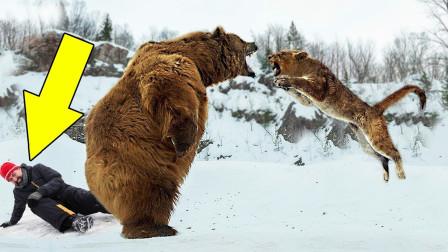 5个野生动物救人的感动瞬间,霸气熊妈击退食人山狮,无人相信?