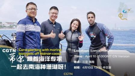 CGTN带你跟着海洋专家一起去南海种珊瑚呀!