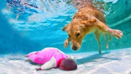 """小女孩海中""""溺水"""",狗狗叼起她就往岸上拖,真是太暖心了!"""