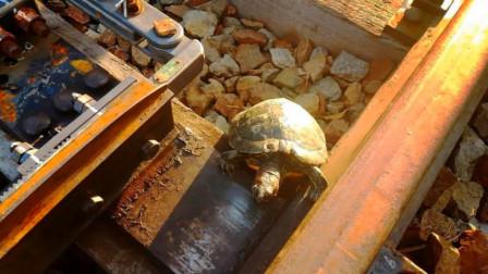 日本最温暖的设计,为救乌龟专门修铁路,网友:被暖到了!