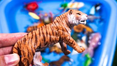 认识老虎大熊猫袋鼠等动物